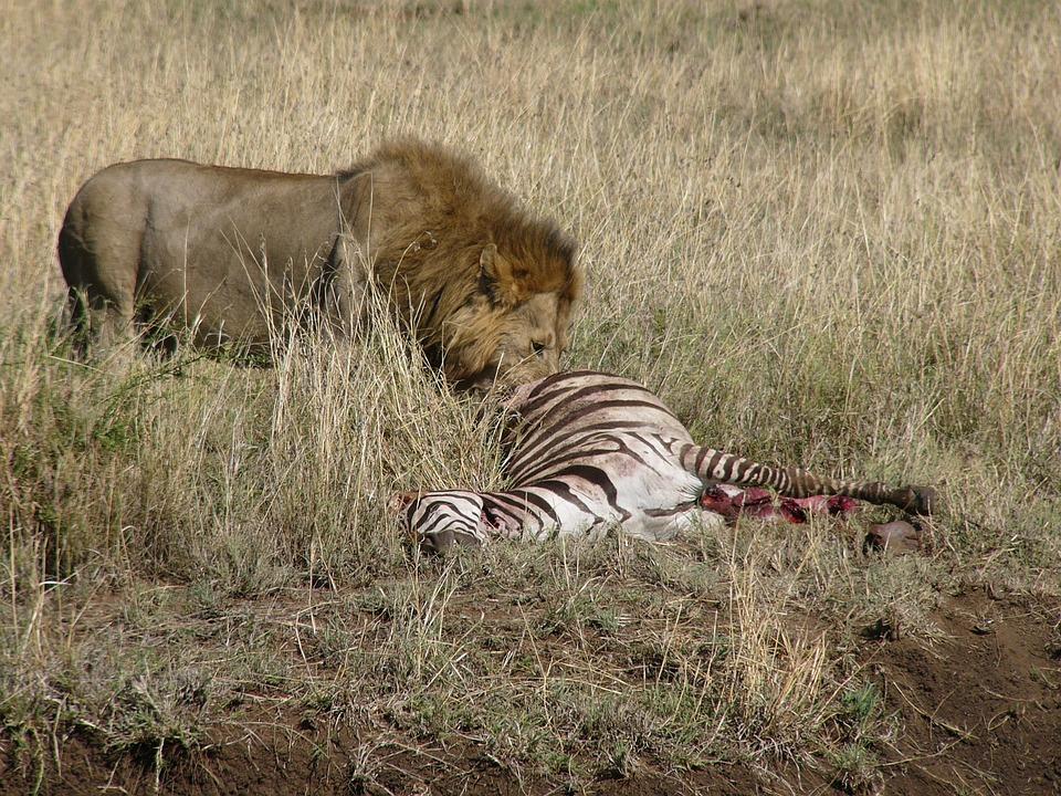 masai mara 11