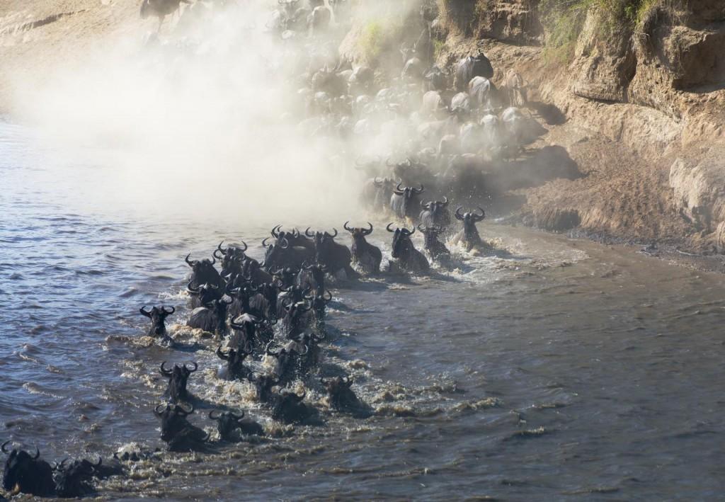 masai mara - migration1