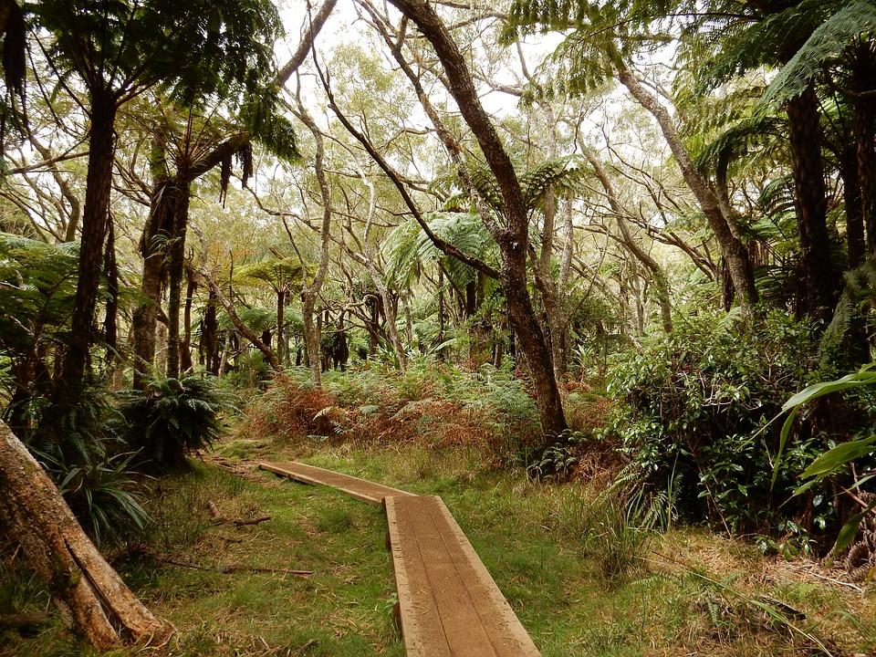 Może spacer po pierwotnym lesie? (fot. pixabay.com)
