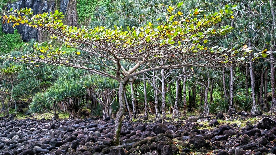 Kolejny okaz z dziewiczego lasu (fot. pixabay.com)